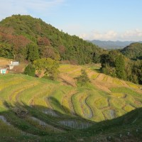 大山千枚田と東京ドイツ村