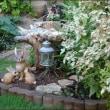 猫犬と庭の物語