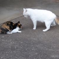 見島発 【不思議猫のお話し】 (?_?)