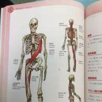 T先生実技授業(増補)〜筋・筋膜螺旋線について〜
