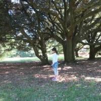 昭和記念公園散策