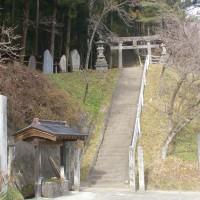 福島県二本松市、小浜長折諏訪神社の大杉です!!