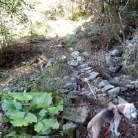 坂元棚田登山口から小松山に登る。