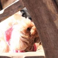 ピンク色のセーター☆