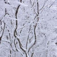 牧ノ戸峠の冬模様8・・・【いな】