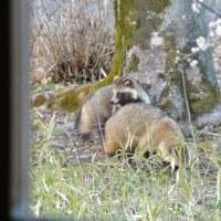 我が家の庭に出てくる動物たち
