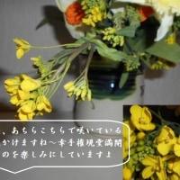 菜の花畑 菜の花が咲き誇る