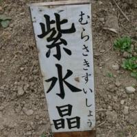 �ֲ֤����θ��פΥܥ���ʲ�ð�ˡ���徽�ʤ�餵���������礦�ˡ�2015ǯ�����ʶ��