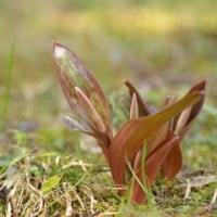 またもや小さな花たち..わち山野草の森(2)