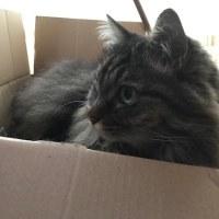 今日の猫風景と あの世系のご質問にお答えしてと。