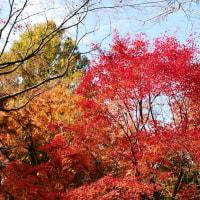京都の紅葉(東福寺・南禅寺・実相院)