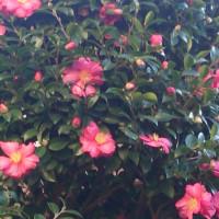 冬の花、はな