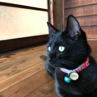 教室の看板猫、ジジィ