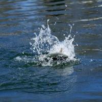 ハコスチ 「新たな感動を釣人へ」