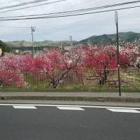 プロローグ 「飯田やまびこマーチ」に参加(長野県飯田市)