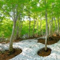 松之山の新緑
