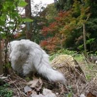 2016 秋の景色 No9  (歌仙の滝)