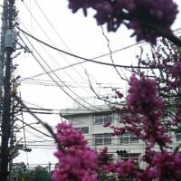 さむいけど花は咲いてきました。