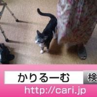 2016/09/29(09:32:49)写真 猫S