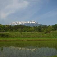 17年5/30~今日の御嶽山~カッコウ
