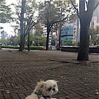 花の街 広島。 そして、秋。  の巻