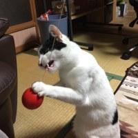 くーさん、けん玉で遊ぶ