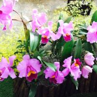 鮮やかな蘭の世界