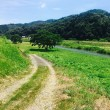 夏の田舎の川辺