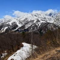 岩岳のダンコウバイ