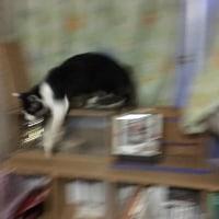 我が家に「ノラ猫」侵入・・・「猫と知恵比べ」の巻き・・・「一泊二日」滞在・・・さて現在は???(^0^)
