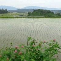 田植え.稲渕・老い子供も自然に寄り添って。【奈良県】     17・6月18日