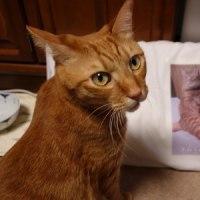 ミーヤンと枕カバー