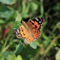 秋晴れの光の中にチョウが舞い