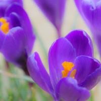 お花の時期が楽しみ