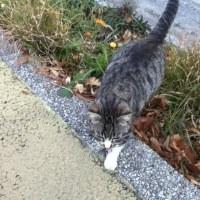 京都の猫と清水の猫