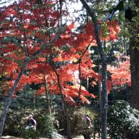 紅葉、手近で鑑賞。