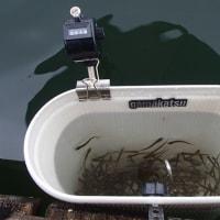 ワカサギ釣り情報:丹生湖ワカサギ釣り大会で今シーズンは〆・・・