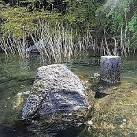 837.びわ湖で花見 ― 亀たちの花見
