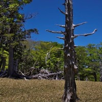 大台ヶ原登山「枯木タワー」