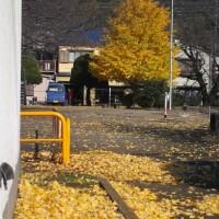 紅葉 落ち葉 木枯らし乱舞