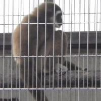 西山動物園修繕工事