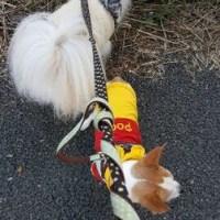散歩に行けたよ!