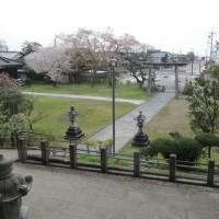 本屋親父のつぶやき 4月21日春日神社境内の桜も葉桜に向かってます