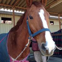 馬にとっては、ネイルサロン⁉︎