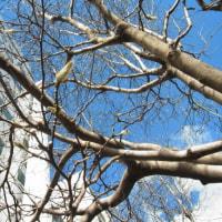 枝は伸びていく