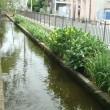 散歩道の川。