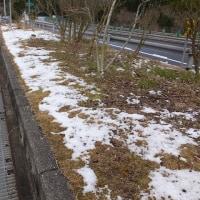 南国の高速路肩雪少し