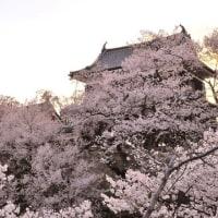 桜満開の上田城4/15 vol.2