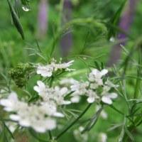 5月25日(木) 静かな恵みの雨