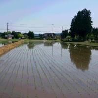 田に水を張れば温度が5度下がる
